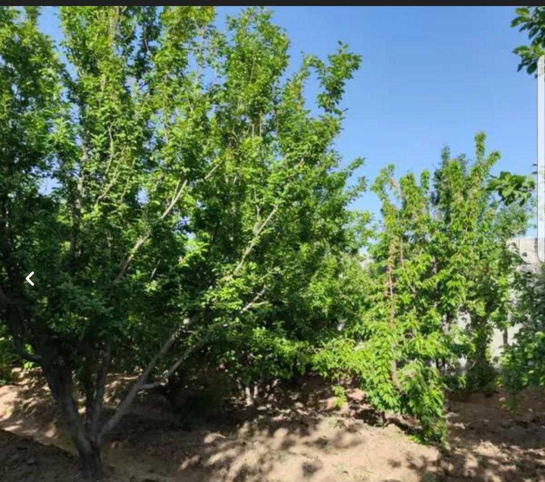 باغ 900 متری قلعه سفید اصفهان
